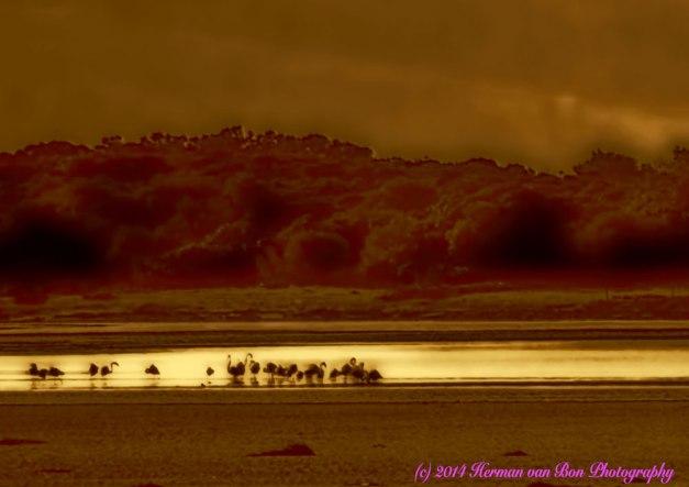 flamingo30juli14