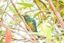 bird-15dec14-2