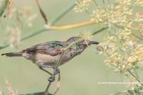 birdStanfordTable24jan15-2