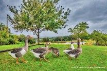 quack2