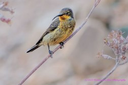 sunbird20dec14-2