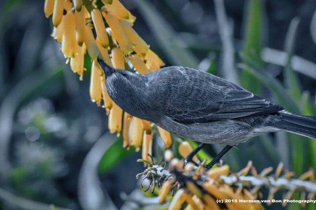 outstanding-bird