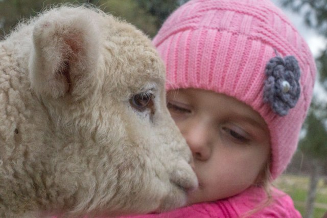 SH-kids-on-the-farm2-the-kiss2