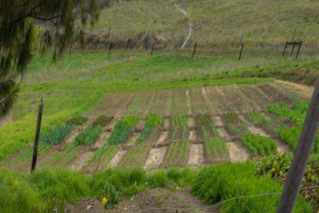 new veggie patch