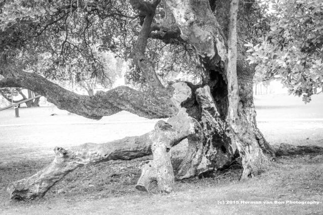 bbq-tree