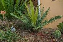 E. Lemoembiensis (broodboom)