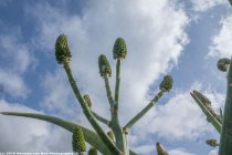 aloes-in-stanford2