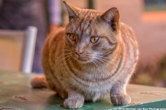 Portrait-of-Garfield2