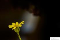 flower-9oct17