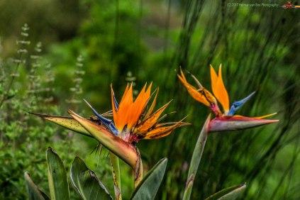 LF-flowers1