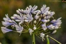 LFflowers2