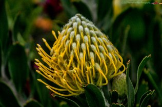 LFflowers5