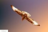 wings8