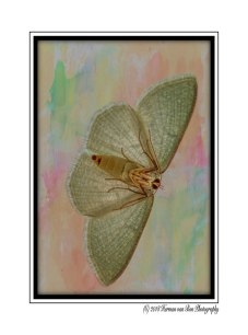 15oct18butterfly2