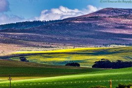 3aug18-getting-yellow-in-the-overberg